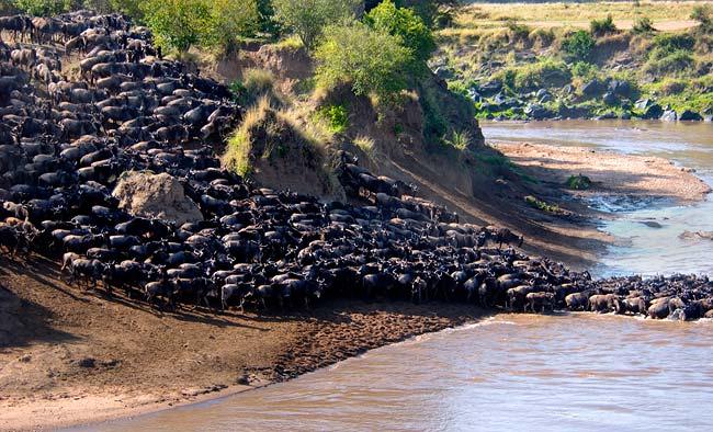 8-Wildebeest-migration-in-the-Serengeti-and-Maasai-Mara