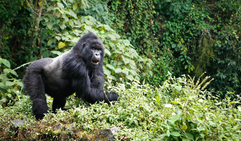 9-Virunga-Mountains-Wildlife