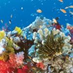 Големият бариерен риф – уникалното подводно вълшебство