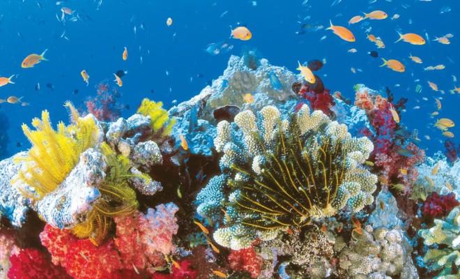 Great-Barrier-Reef-7