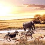 10 места в Африка, които трябва да посетите