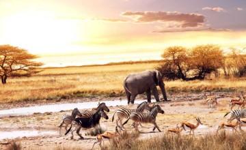 african-jungle-1024x640