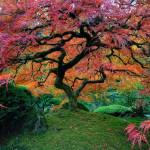 15-те най-невероятни дървета в света