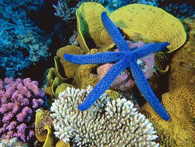 great_barrier_reef_australia_267802