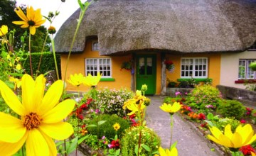 A-buttercup-yellow-thatched-cottage-in-Co-Clare