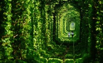 Fairy-Tale-Tunnel-of-Love-Found-in-Klevan-Ukraine-1