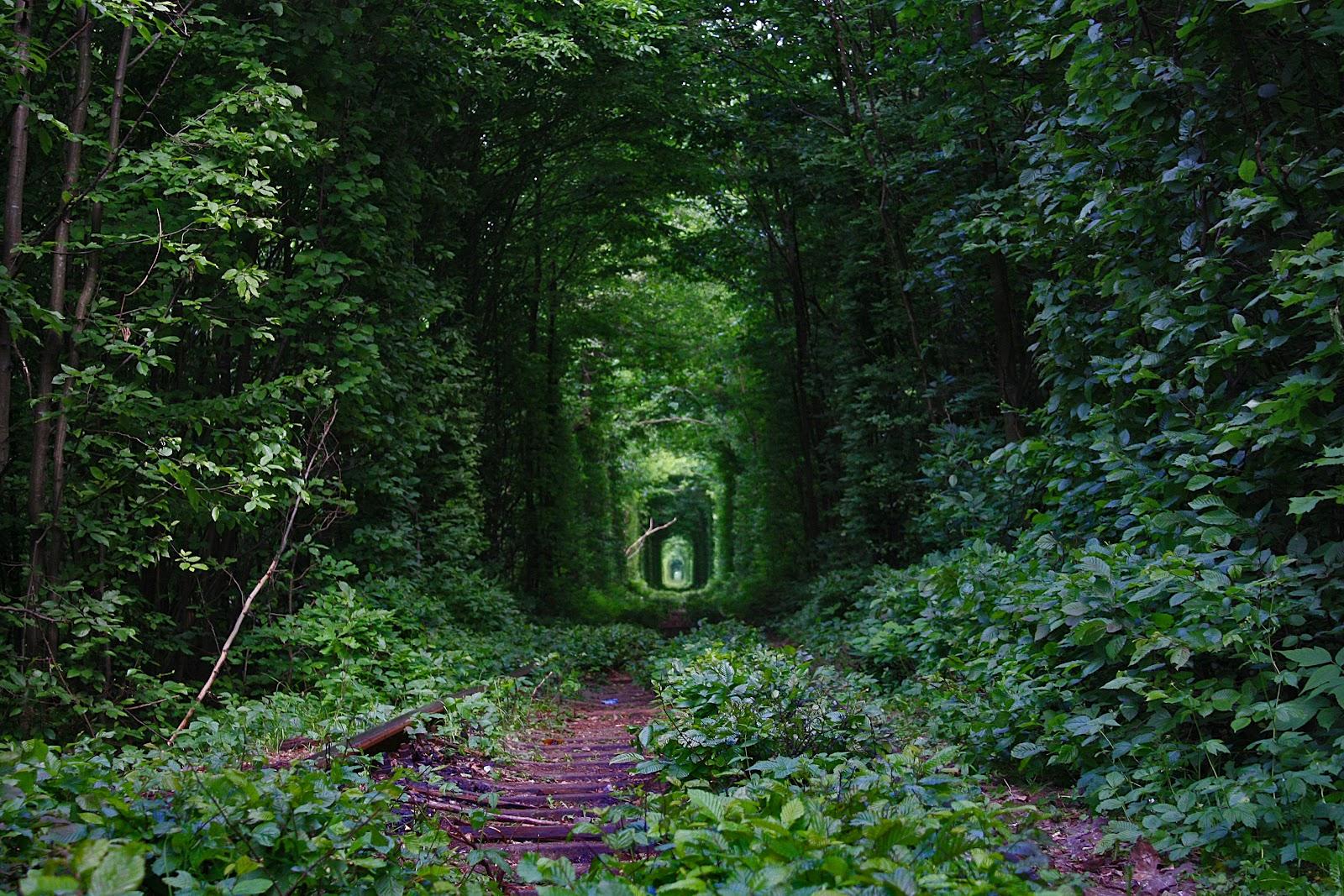Fairy-Tale-Tunnel-of-Love-Found-in-Klevan-Ukraine-7