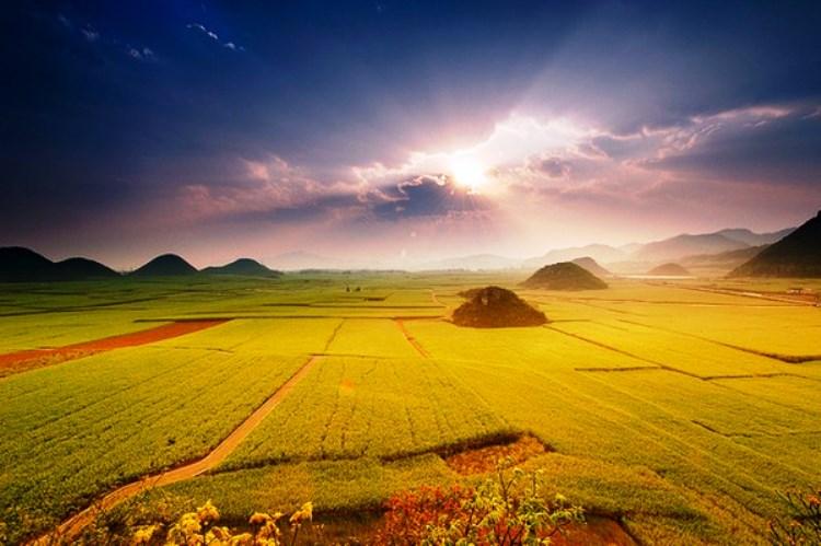 amazing-Canola-Flower-Fields-China1