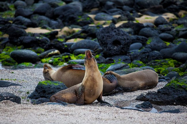 galapagos-islands-pictures