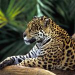 15 удивителни факта за Амазонската джунгла