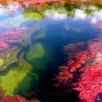 Неземната 5-цветна река Каньо Кристалес