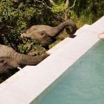8 страхотни места, където дивите животни са на една ръка разстояние