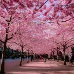 13 прелестни улици, разцъфващи през пролетта