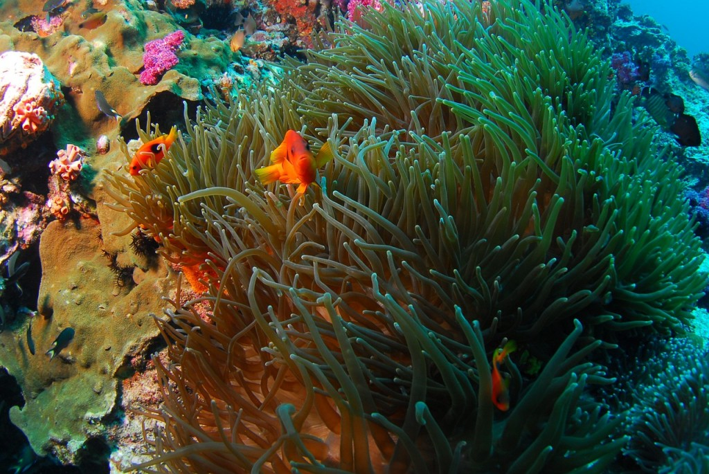 diving-689833_1280