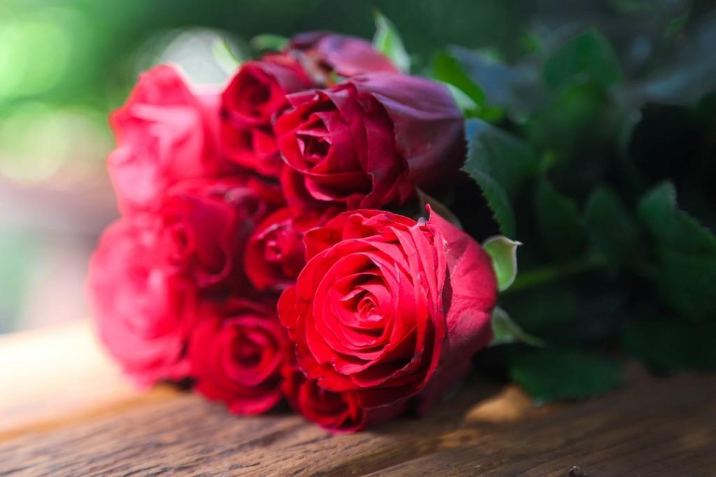 roses-687253_1280
