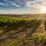 5 причини да се влюбите в Тоскана