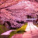 Вълшебната цъфтяща Япония