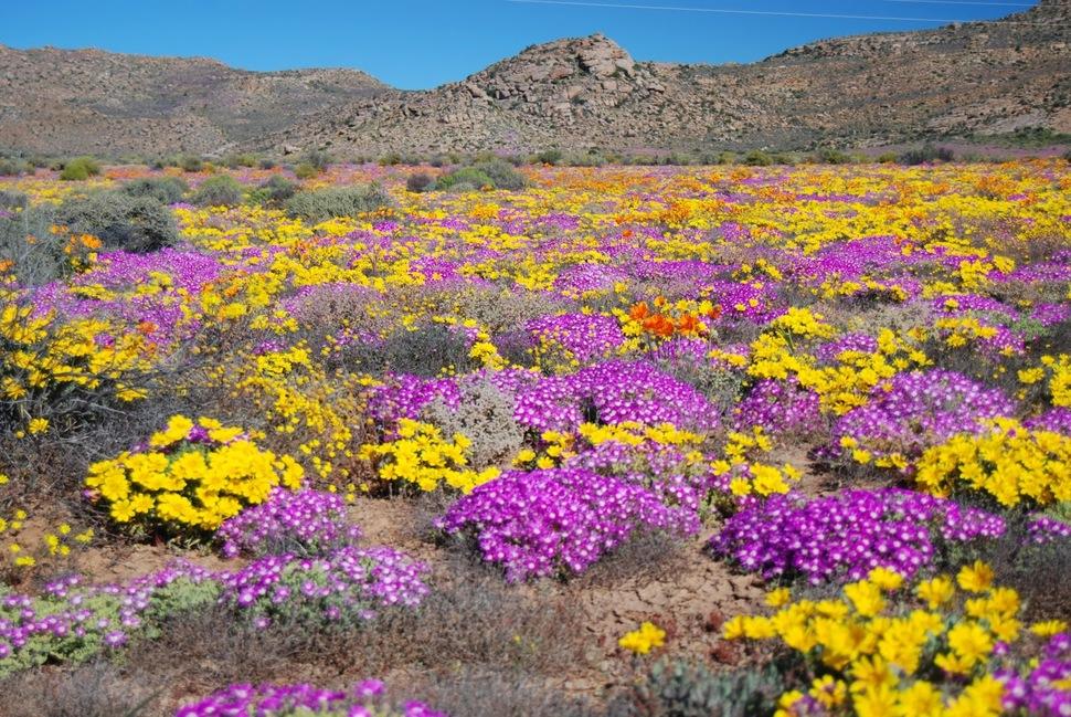 Namaqualand, Namibia