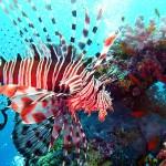 Какво ти трябва, за да опознаеш вълшебния подводен свят?