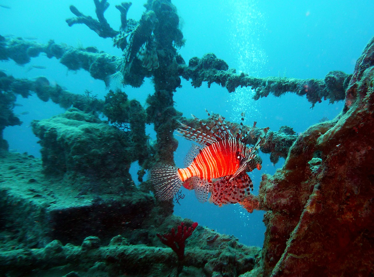 diving-712637_1280