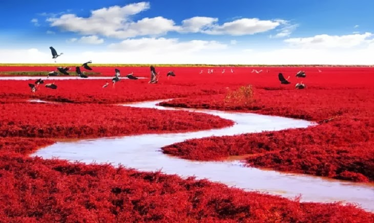 14-Red Seabeach, Panjin, China