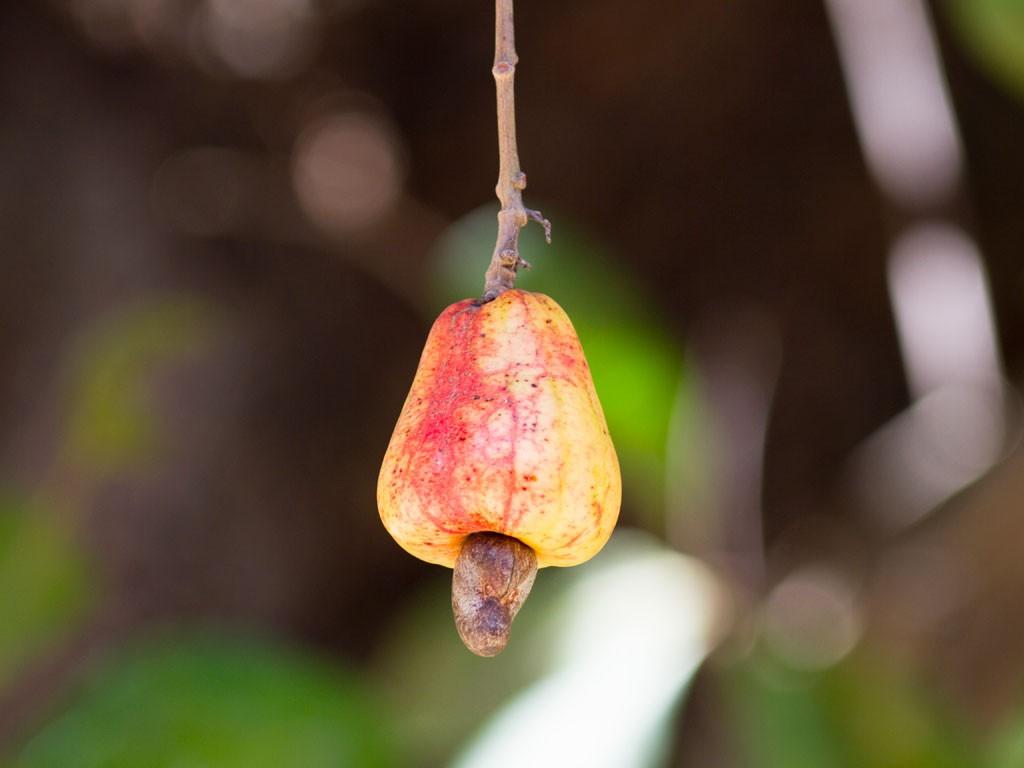6-raw-cashews