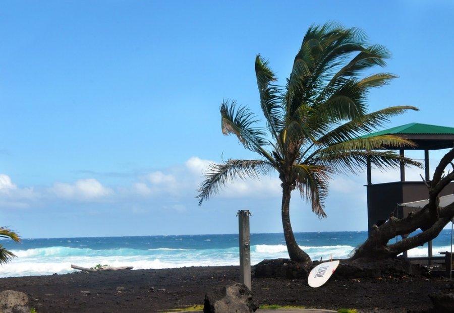 8-punaluu-juodojo-smelio-papludimys-havajai-62042305