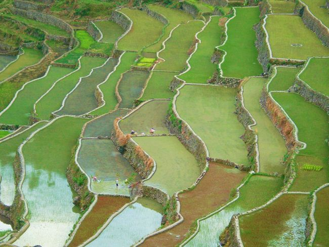 banaue-rice-terraces-philippines-4