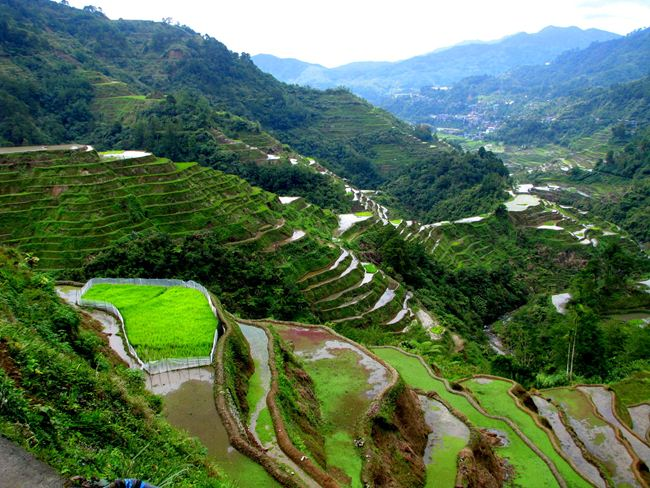 banaue-rice-terraces-philippines-7