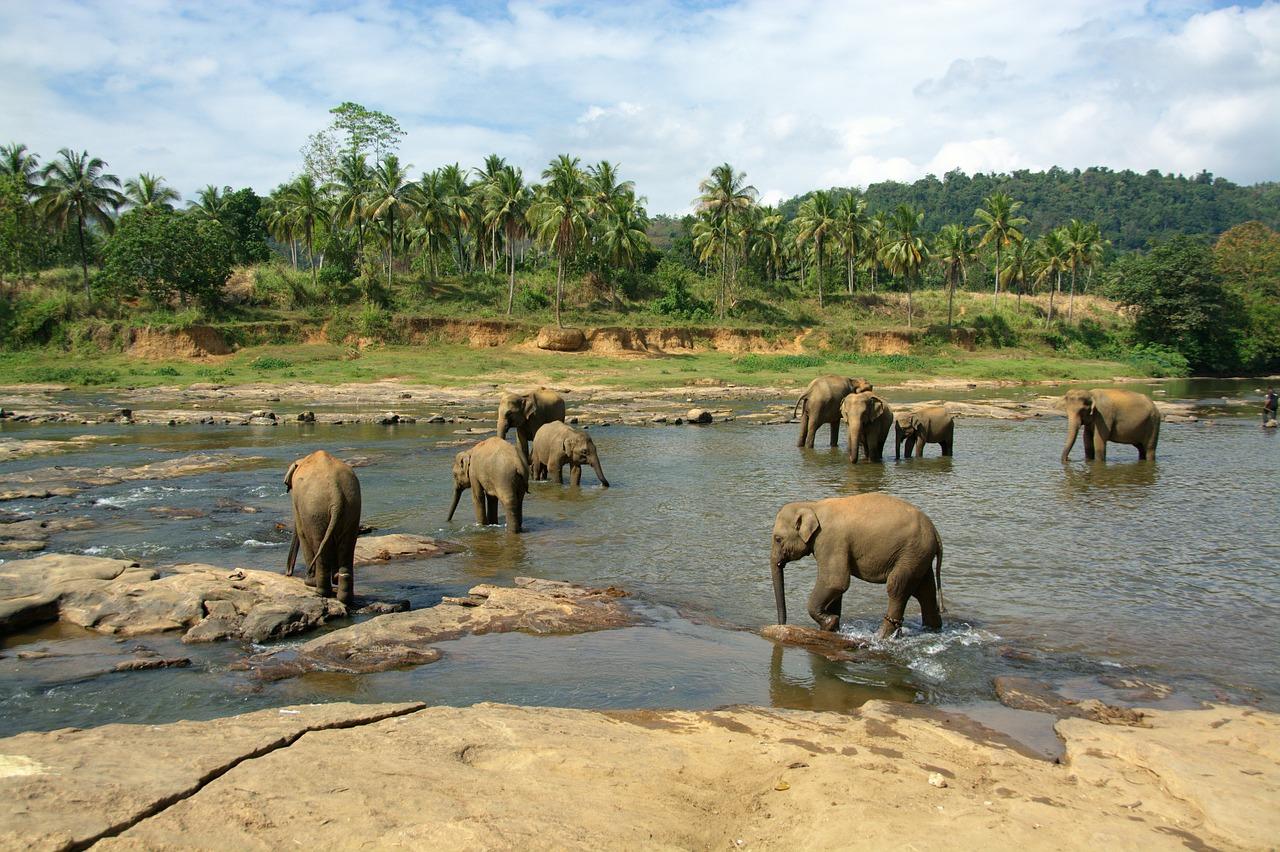 elephants-683709_1280