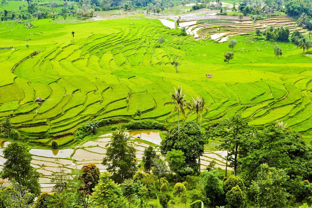 rice-terraces-364442_1280