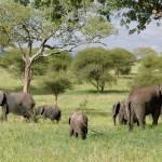 Ето я най-добрата страна за сафари в Африка