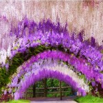 Най-виолетовата разходка в света: Градините Фуджи