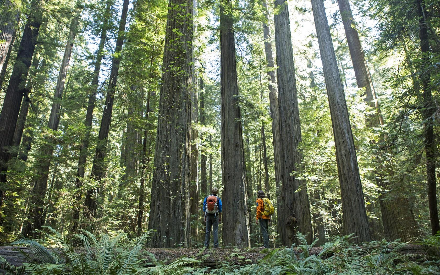 2Overs-Giant-Redwoods-157952770-1680x1050