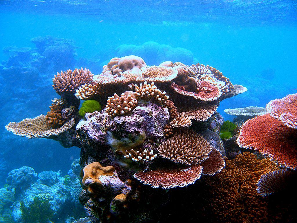 6Great_Barrier_Reef