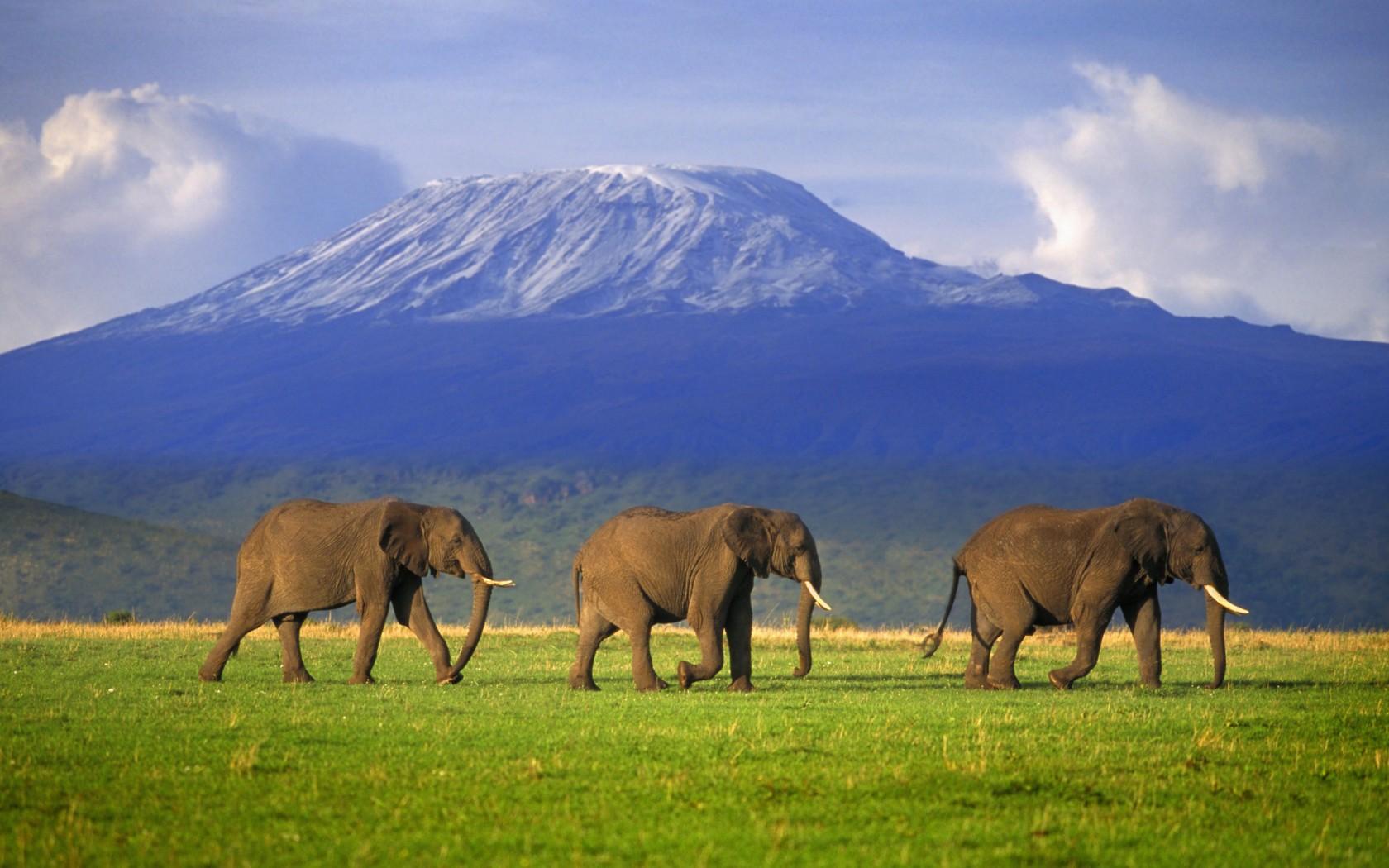 7Edited-Kilimanjaro-CSM106673-1680x1050