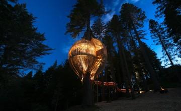 treehouse-restaurant-main