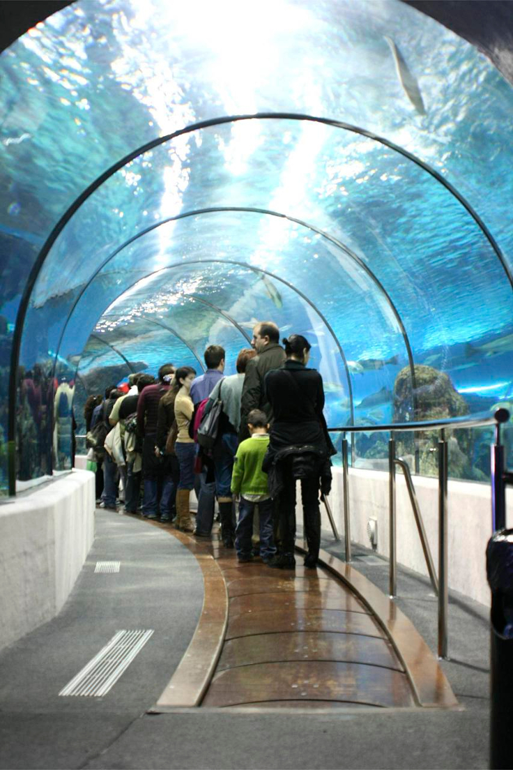 7-aquarium