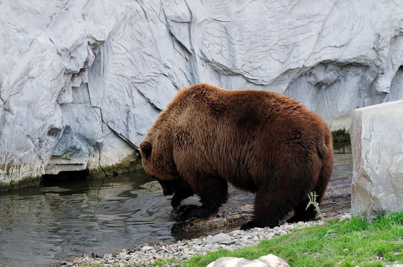 bear-348234_1280