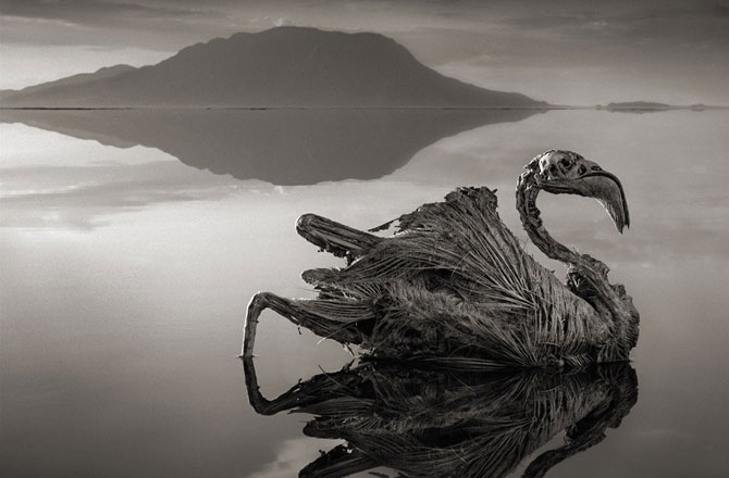 lake-stone-animals-natron