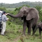 Говорещият със слонове – една трогателна истинска история