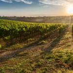 10 места по света, на които можете да опитате най-доброто вино