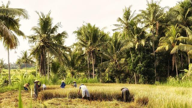 indonesia-570647_640