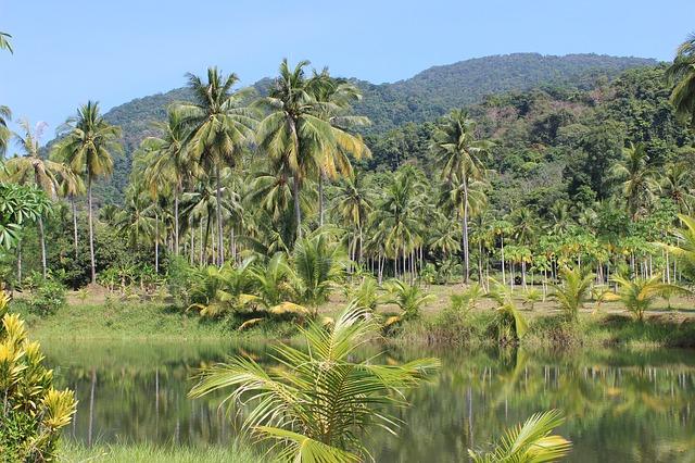 rain-forest-273780_640