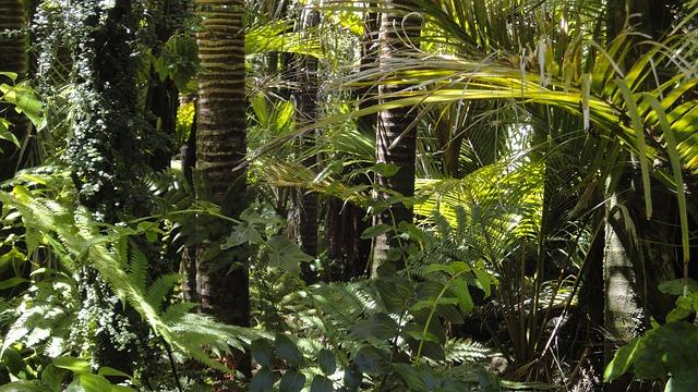 rainforest-78516_640