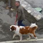 Сан Бернард, кучета, Наполеон и сандалите на Господа