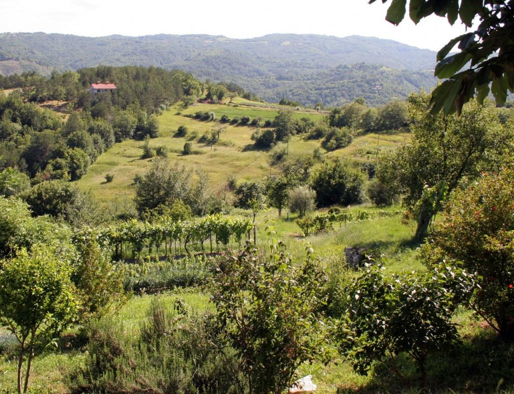 istrian-landscape-1557630-1279x978