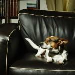 """""""Кучето не хареса престоя си тук"""" и други оплаквания по хотелите"""