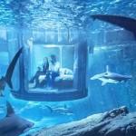 Късметлия ще спи в стая, спусната в парижкия аквариум с акули