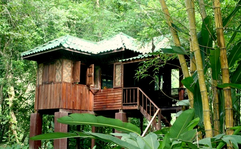 Our_Jungle_House